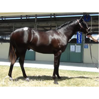 ATB's 2011 Commands - Maggie's Mate colt