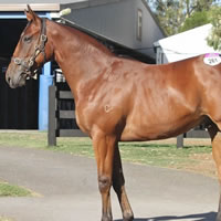 Share available in Fastnet Rock colt
