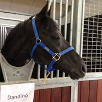 Dandino arrives in Australia