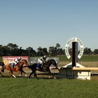 Avoca Shire Turf Club to benefit from funding improvement boost