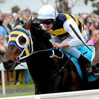 More Than Sacred popular elect for 2014 Sportingbet Geelong Cup