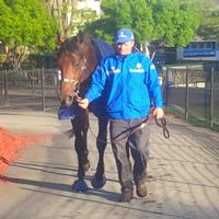 Derby Tracker – Gouldian (John O'Shea)