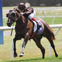 Carriages and Murt the Flirt chasing more Magic Millions riches