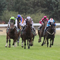 25 nominations for 2015 Petrogas Regional Burrumbeet Cup on New Year's Day