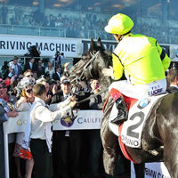 dandino-caulfield-th