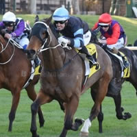 Tasmanian cult figure cleans up at the Valley