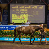 Pierro steps up on Day 3 of 2016 Gold Coast Magic Millions Yearling Sale