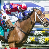 Eclair Choice wins South Australian Horse of the Year