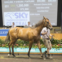 Redoute's Choice Colt tops Day Three of 2017 Magic Millions Gold Coast Yearling Sale